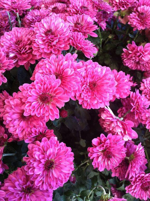 image from http://gardenrooms.typepad.com/.a/6a00e008cbe8b58834019b00217055970c-pi