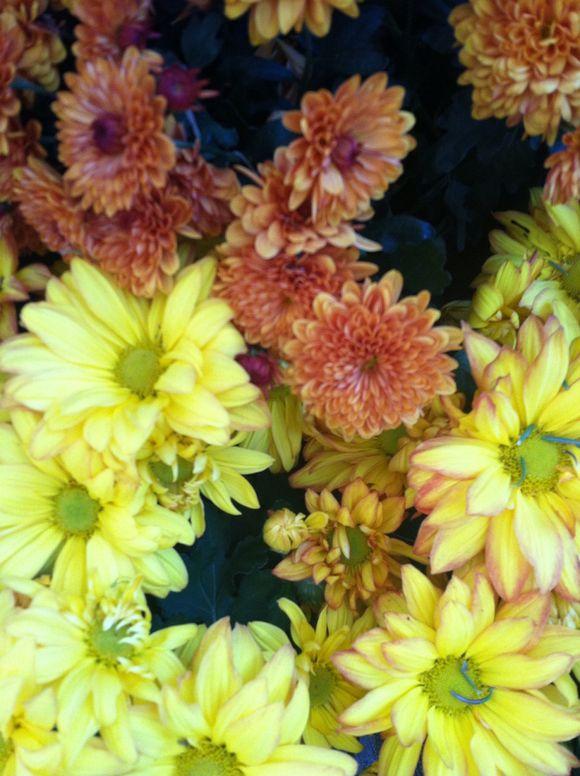 image from http://gardenrooms.typepad.com/.a/6a00e008cbe8b58834019b002192d5970b-pi