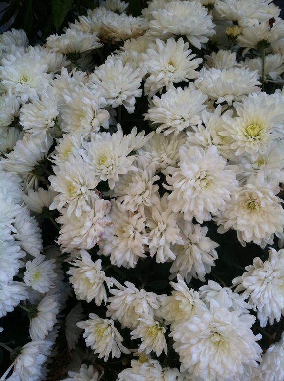 image from http://gardenrooms.typepad.com/.a/6a00e008cbe8b58834019b0021706c970c-pi