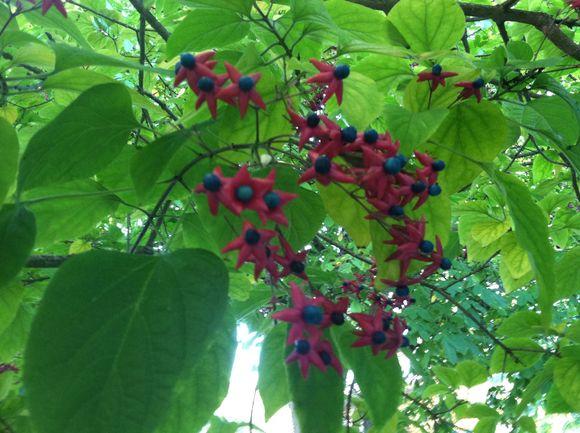 image from http://gardenrooms.typepad.com/.a/6a00e008cbe8b58834019b00427464970d-pi