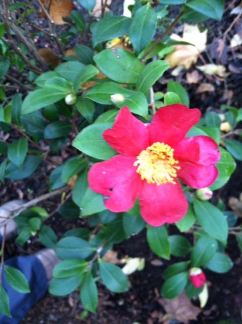image from http://gardenrooms.typepad.com/.a/6a00e008cbe8b58834019b01763268970d-pi