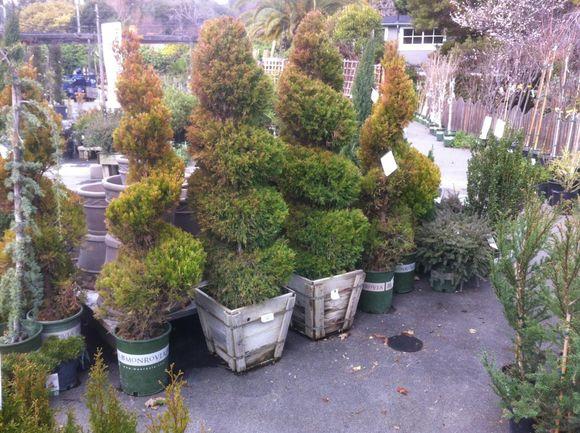 image from http://gardenrooms.typepad.com/.a/6a00e008cbe8b5883401a73d795a9b970d-pi