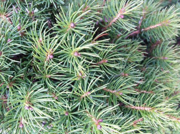 image from http://gardenrooms.typepad.com/.a/6a00e008cbe8b5883401a5116e02fb970c-pi