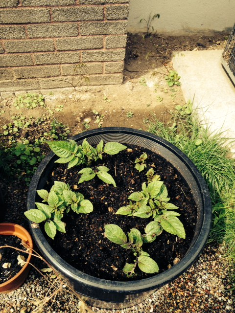 image from http://gardenrooms.typepad.com/.a/6a00e008cbe8b5883401a511d4196d970c-pi