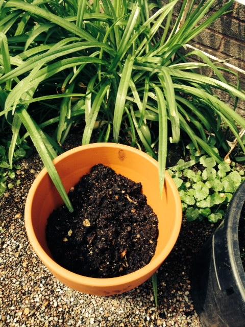 image from http://gardenrooms.typepad.com/.a/6a00e008cbe8b5883401a511d41972970c-pi