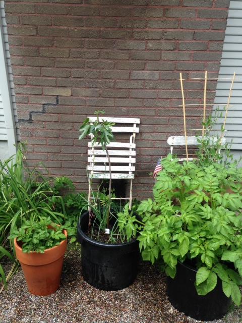 image from http://gardenrooms.typepad.com/.a/6a00e008cbe8b5883401a3fd2496d6970b-pi
