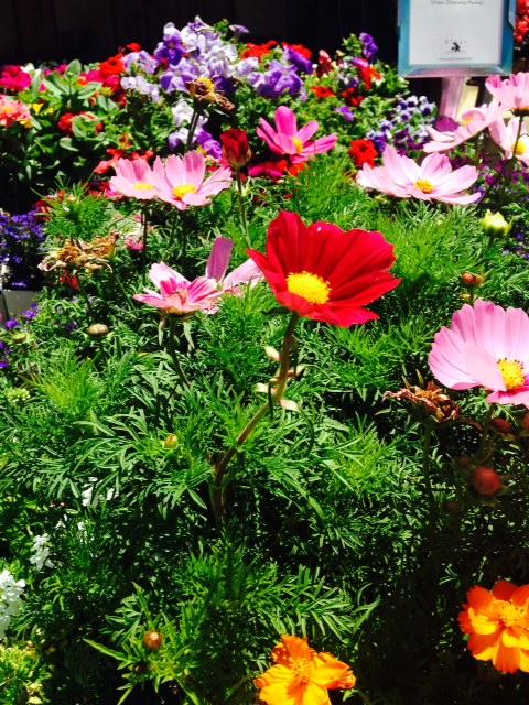 image from http://gardenrooms.typepad.com/.a/6a00e008cbe8b5883401a511d8609a970c-pi