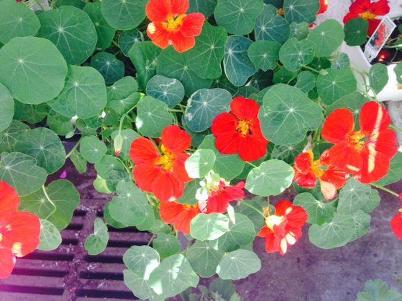 image from http://gardenrooms.typepad.com/.a/6a00e008cbe8b5883401a73de3ca2b970d-pi