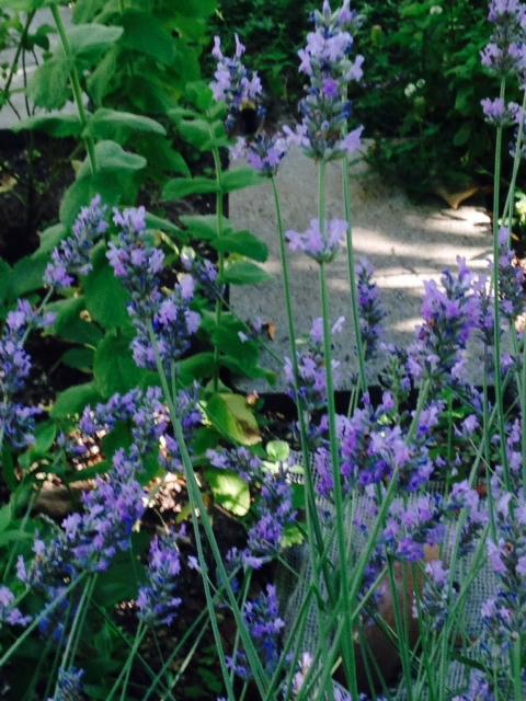 image from http://gardenrooms.typepad.com/.a/6a00e008cbe8b5883401a3fd2ab6e3970b-pi
