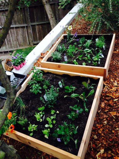 image from http://gardenrooms.typepad.com/.a/6a00e008cbe8b5883401a511e8665c970c-pi