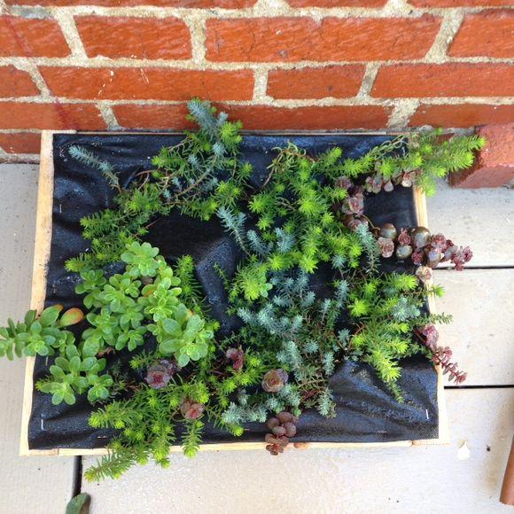 image from http://gardenrooms.typepad.com/.a/6a00e008cbe8b5883401a511e8665f970c-pi