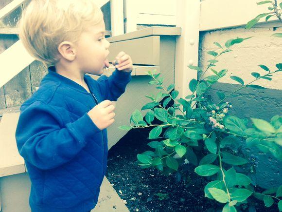 image from http://gardenrooms.typepad.com/.a/6a00e008cbe8b5883401a3fd13012a970b-pi