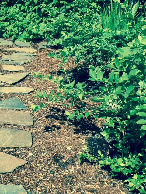 image from http://gardenrooms.typepad.com/.a/6a00e008cbe8b5883401a3fd13012f970b-pi