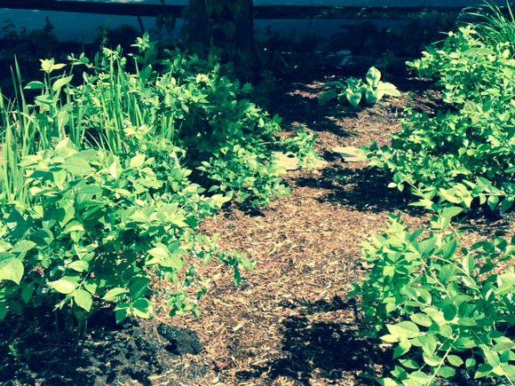 image from http://gardenrooms.typepad.com/.a/6a00e008cbe8b5883401a3fd130134970b-pi