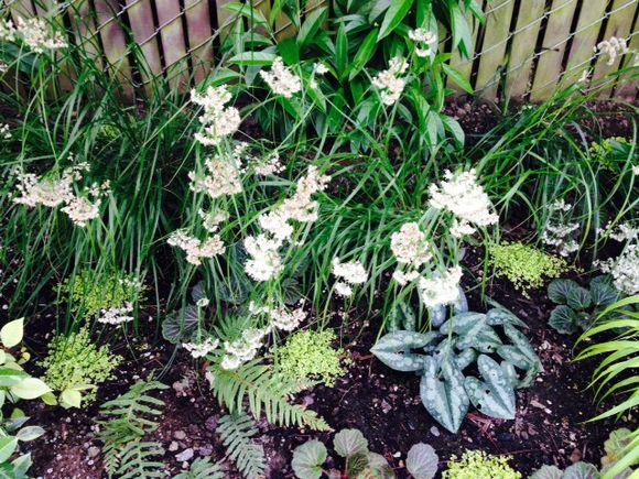 image from http://gardenrooms.typepad.com/.a/6a00e008cbe8b5883401a511c3fa95970c-pi