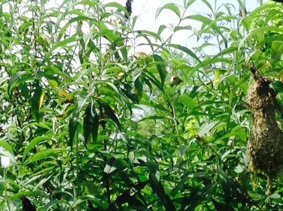 image from http://gardenrooms.typepad.com/.a/6a00e008cbe8b5883401a3fd198f96970b-pi