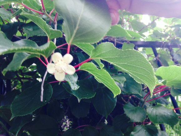 image from http://gardenrooms.typepad.com/.a/6a00e008cbe8b5883401a3fd198fa0970b-pi