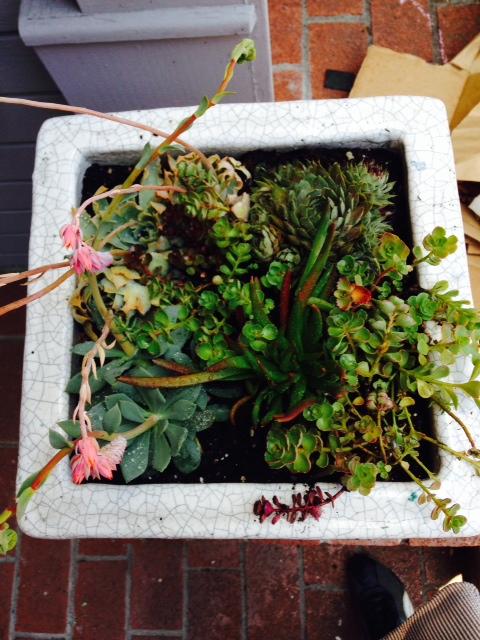 image from http://gardenrooms.typepad.com/.a/6a00e008cbe8b5883401a511e50fee970c-pi
