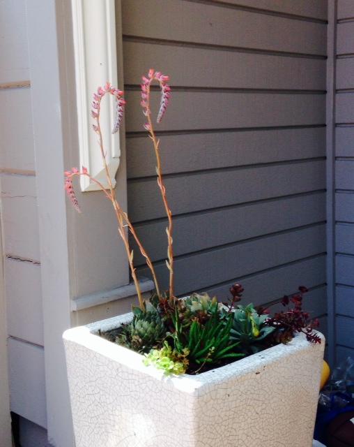 image from http://gardenrooms.typepad.com/.a/6a00e008cbe8b5883401a511e50ff3970c-pi