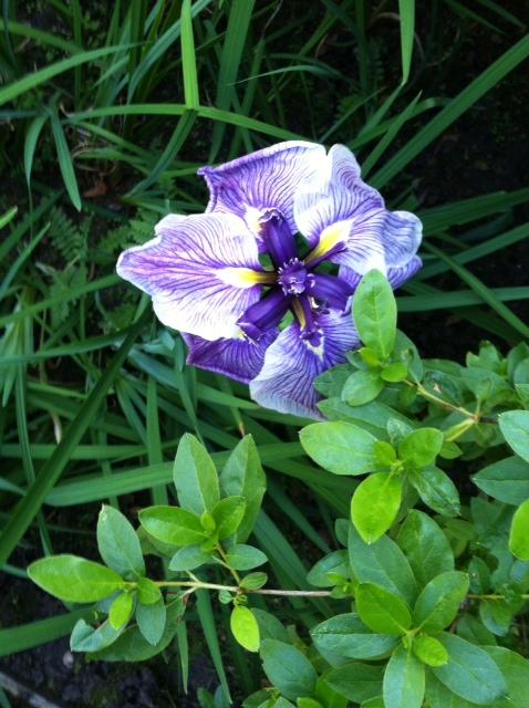 image from http://gardenrooms.typepad.com/.a/6a00e008cbe8b5883401a73d819780970d-pi