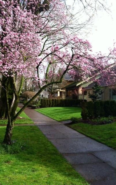 image from http://gardenrooms.typepad.com/.a/6a00e008cbe8b5883401a511804dd1970c-pi