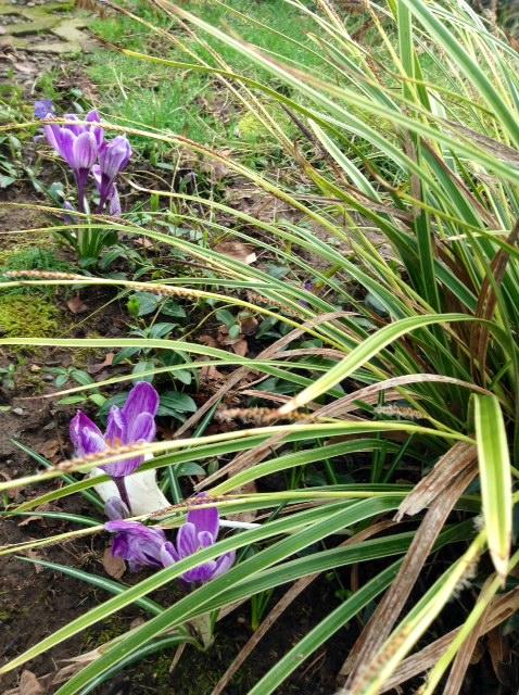 image from http://gardenrooms.typepad.com/.a/6a00e008cbe8b5883401a3fcd07f50970b-pi