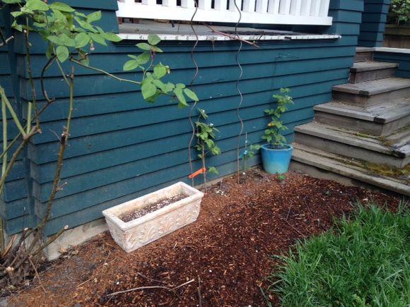image from http://gardenrooms.typepad.com/.a/6a00e008cbe8b5883401a73daec1a9970d-pi