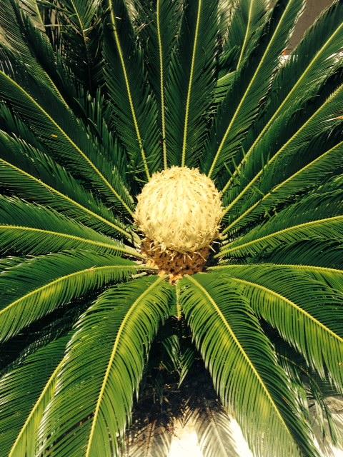 image from http://gardenrooms.typepad.com/.a/6a00e008cbe8b5883401a511ceb093970c-pi