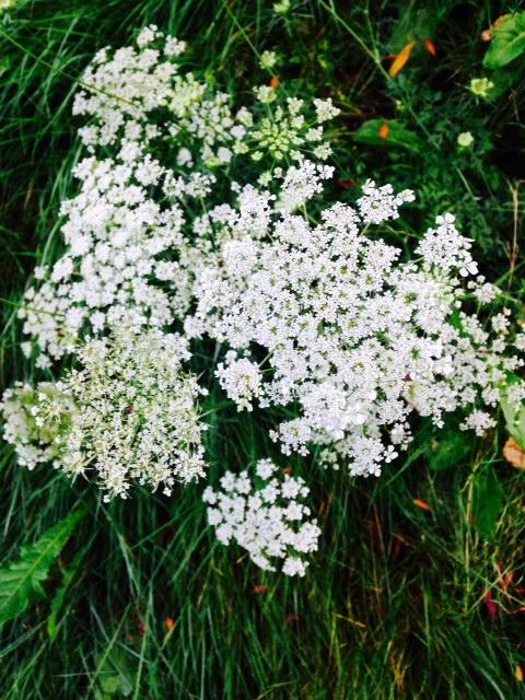 image from http://gardenrooms.typepad.com/.a/6a00e008cbe8b5883401b7c6cbbfa6970b-pi