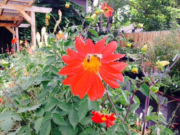 image from http://gardenrooms.typepad.com/.a/6a00e008cbe8b5883401b8d0613736970c-pi