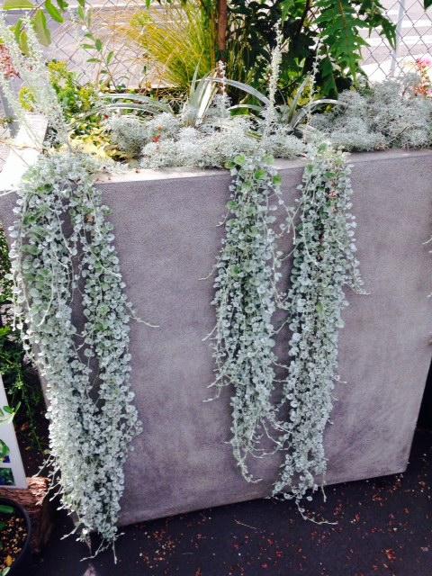 image from http://gardenrooms.typepad.com/.a/6a00e008cbe8b5883401b8d061373b970c-pi