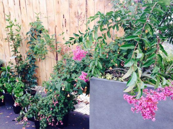 image from http://gardenrooms.typepad.com/.a/6a00e008cbe8b5883401b8d0613744970c-pi