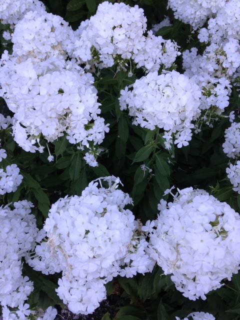 image from http://gardenrooms.typepad.com/.a/6a00e008cbe8b5883401b8d0684266970c-pi
