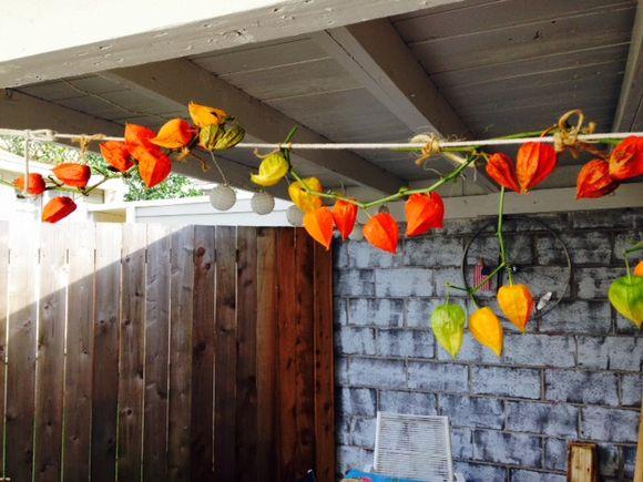 image from http://gardenrooms.typepad.com/.a/6a00e008cbe8b5883401b8d0760917970c-pi