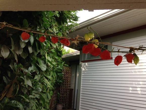 image from http://gardenrooms.typepad.com/.a/6a00e008cbe8b5883401b7c6ec1e38970b-pi