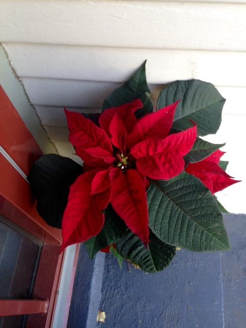 image from http://gardenrooms.typepad.com/.a/6a00e008cbe8b5883401bb07cb9fb9970d-pi