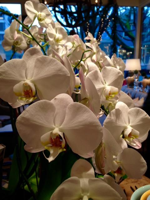 image from http://gardenrooms.typepad.com/.a/6a00e008cbe8b5883401b7c7273a7f970b-pi