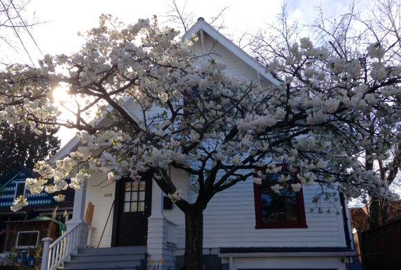 image from http://gardenrooms.typepad.com/.a/6a00e008cbe8b5883401b8d0edfff6970c-pi