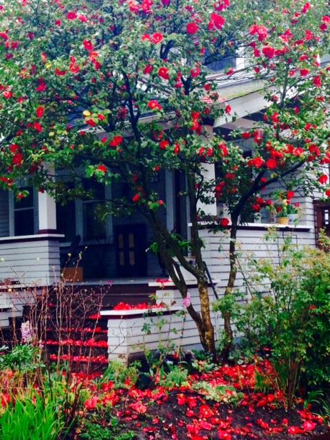 image from http://gardenrooms.typepad.com/.a/6a00e008cbe8b5883401b7c7647b3f970b-pi