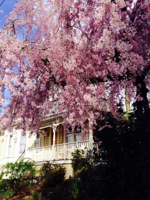 image from http://gardenrooms.typepad.com/.a/6a00e008cbe8b5883401b7c7647b44970b-pi