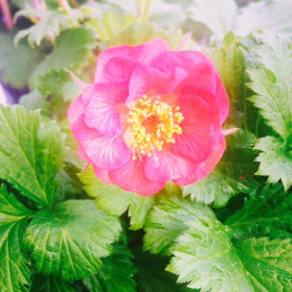 image from http://gardenrooms.typepad.com/.a/6a00e008cbe8b5883401bb08147252970d-pi