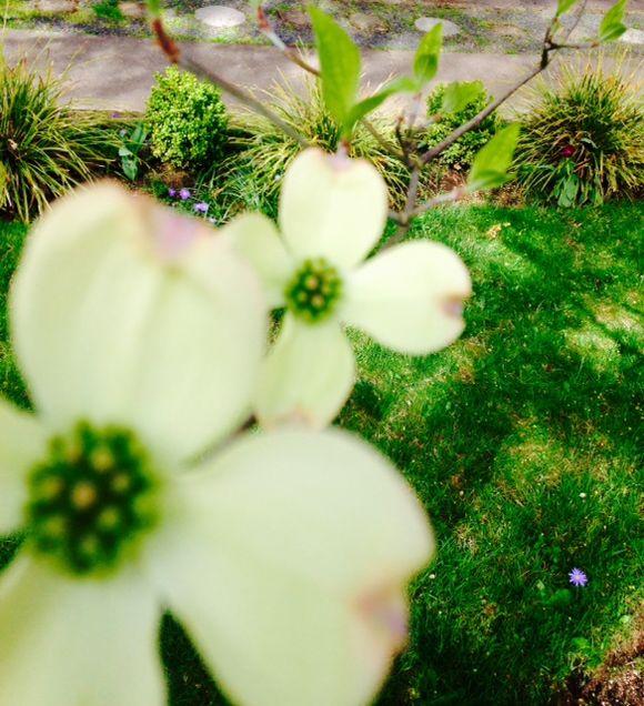 image from http://gardenrooms.typepad.com/.a/6a00e008cbe8b5883401b7c770787d970b-pi
