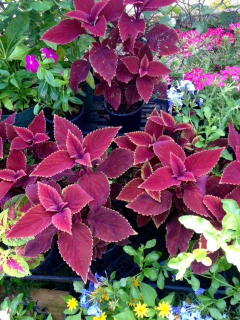 image from http://gardenrooms.typepad.com/.a/6a00e008cbe8b5883401bb0823a09c970d-pi