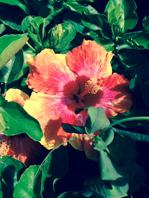 image from http://gardenrooms.typepad.com/.a/6a00e008cbe8b5883401bb0823a0a1970d-pi