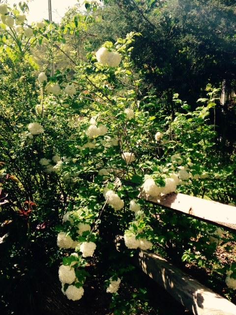 image from http://gardenrooms.typepad.com/.a/6a00e008cbe8b5883401bb0828169a970d-pi