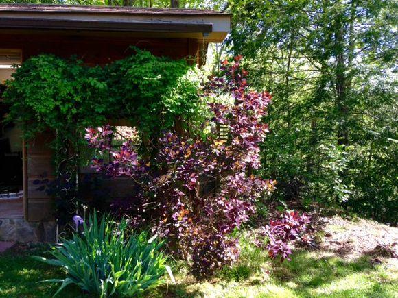image from http://gardenrooms.typepad.com/.a/6a00e008cbe8b5883401b7c7840a3f970b-pi