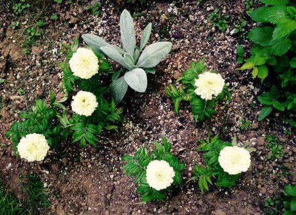 image from http://gardenrooms.typepad.com/.a/6a00e008cbe8b5883401b7c7877498970b-pi