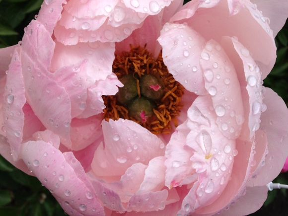 image from http://gardenrooms.typepad.com/.a/6a00e008cbe8b5883401b8d110f8f9970c-pi
