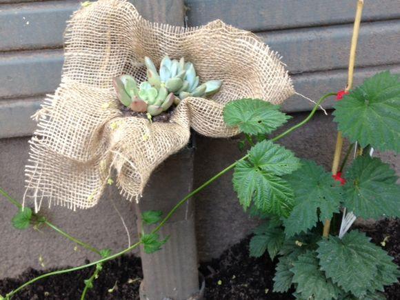 image from http://gardenrooms.typepad.com/.a/6a00e008cbe8b5883401bb082d7cb1970d-pi