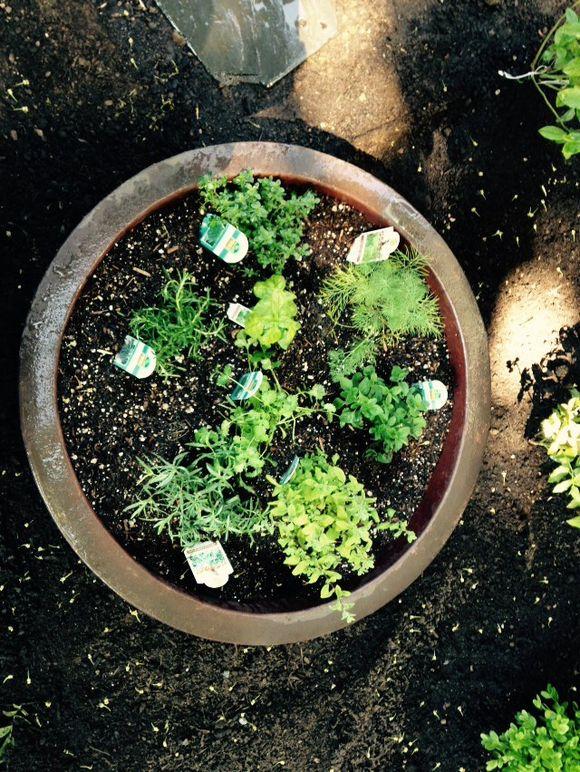image from http://gardenrooms.typepad.com/.a/6a00e008cbe8b5883401b8d1130bc9970c-pi